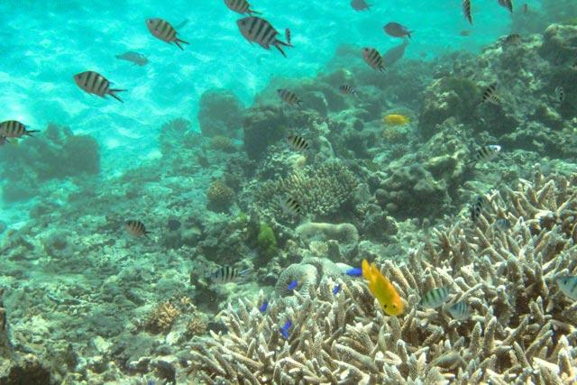 bunte-tropische-fische-an-einem-korallenriff