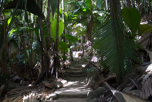der-naturpark-vallee-de-mai-auf-praslin