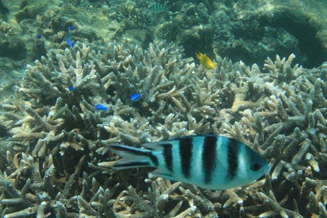 tauchen-auf-den-seychellen-mit-korallen