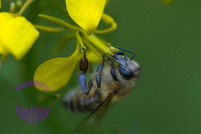 eine-macroaufnahme-von-einer-wespe-die-auf-einer-gelben-wildblume-sitzt-logo