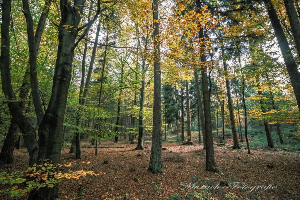 laubwald-im-herbst-