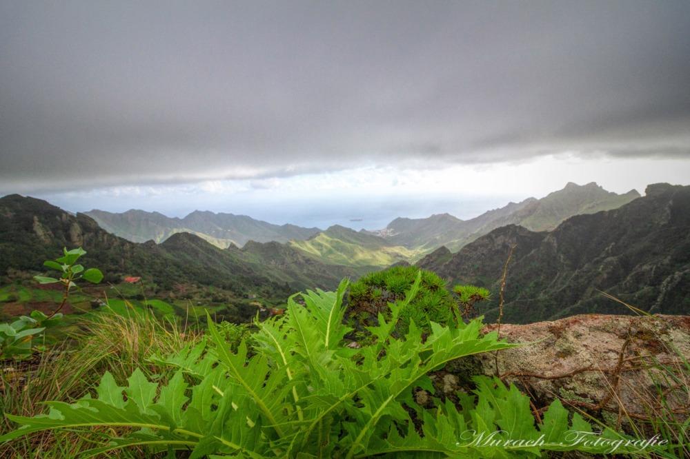gruene-pflanzen-im-hintergrund-gebirge-auf-teneriffa