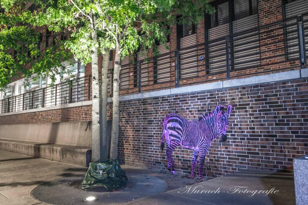 zebra-graffiti